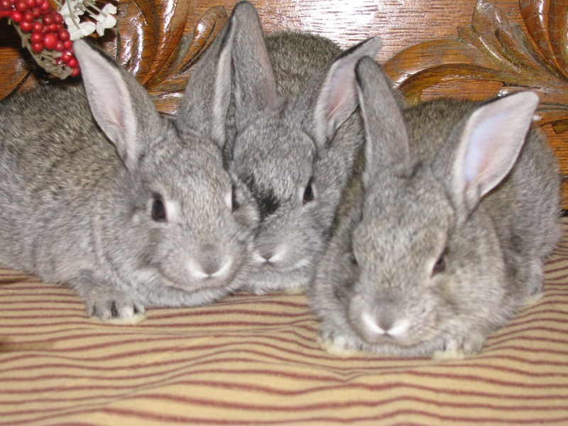 This is a great blog for learning about all things rabbit --has a very ...